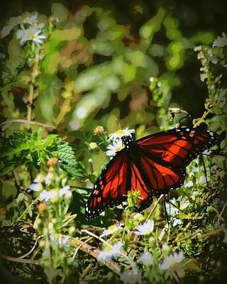 Photograph - Monarch In November 1 by Sheri McLeroy