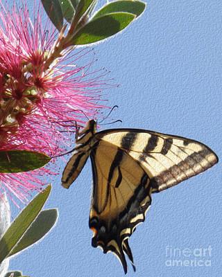 Swallowtail Original by Michael Lovell