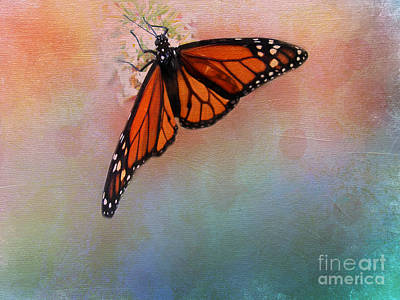 Photograph - Monarch by Judi Bagwell
