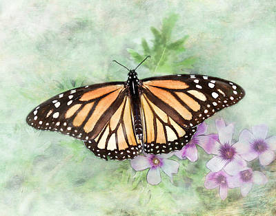 Photograph - Monarch Migration by David and Carol Kelly