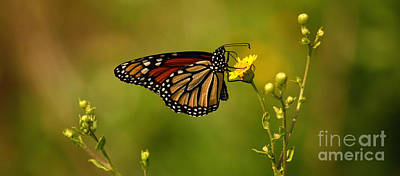 Photograph - Monarch Moment by John F Tsumas
