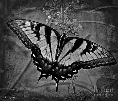 Photograph - Monarch Mystique by Eve Spring