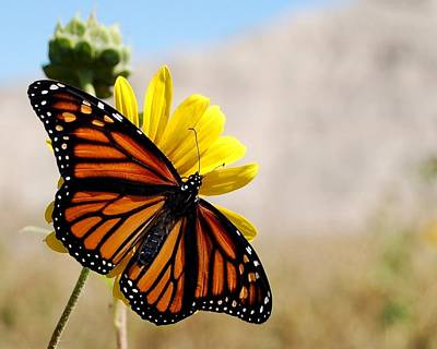 Photograph - Monarch Of The Badlands by Dakota Light Photography By Dakota