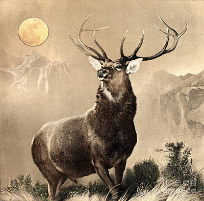 Glen Drawing - Monarch Of The Glen by Celestial Images