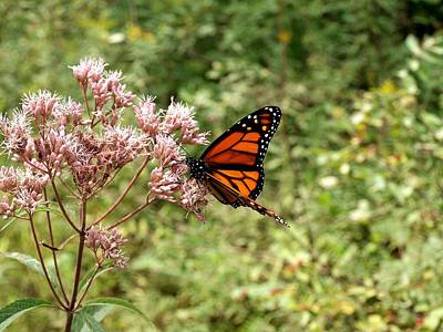 Photograph - Monarch Of The North by Joshua House