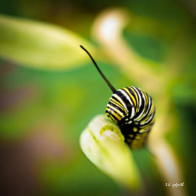 Photograph - Monarch Offspring Squared by TK Goforth