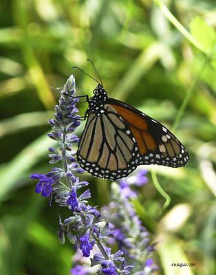Photograph - Monarch On Blue by Allen Sheffield