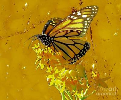 Photograph - Monarch On Gold by Janette Boyd