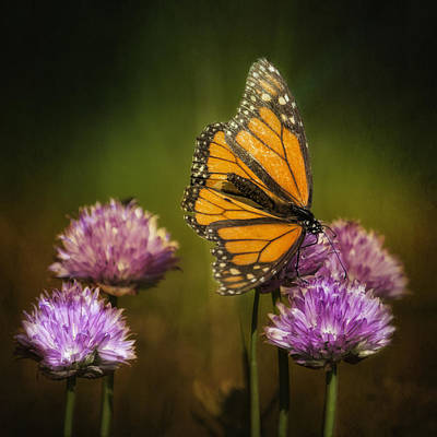 Weed Digital Art - Monarch On Moody Chives by Bill Tiepelman