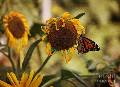 Monarch On The Sunflower Art Print by Yumi Johnson