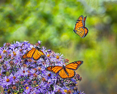 Photograph - Monarch Squadron by Bill Pevlor