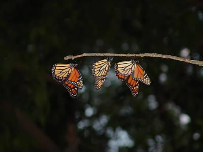 Monarch Trio Art Print by Shelly Gunderson