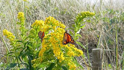 Photograph - Monarchs by Nance Larson