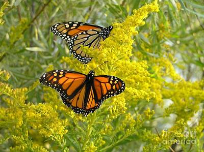 Art Print featuring the photograph Monarchs On Goldenrod by Susan  Dimitrakopoulos