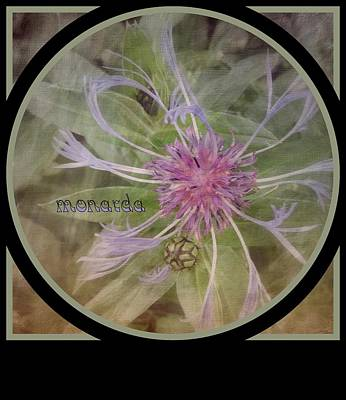 Photograph - Monarda by Jodie Marie Anne Richardson Traugott          aka jm-ART