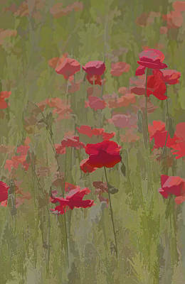 Monet Poppies Art Print by David Letts