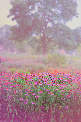Photograph - Monet Spring by Jenny Rainbow