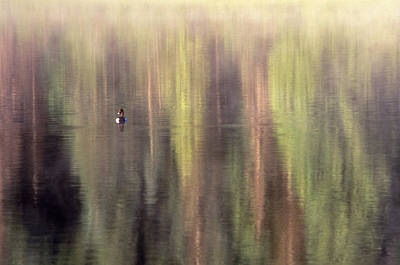 Print featuring the photograph Monet's Duck by Ken Dietz