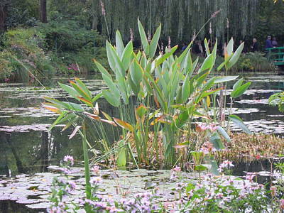 Photograph - Monet's Garden 2 by Ellen Meakin