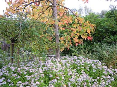 Photograph - Monet's Garden 3 by Ellen Meakin