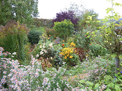 Photograph - Monet's Garden 6 by Ellen Meakin