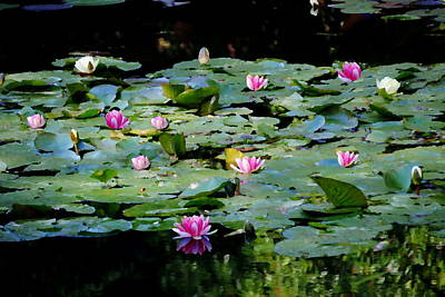 Photograph - Monet's Lilies At Giverny by Jacqueline M Lewis