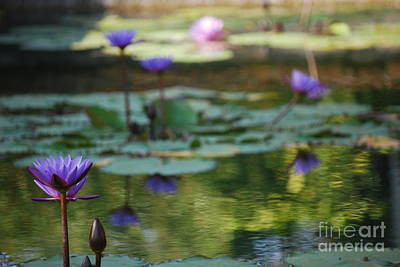 Photograph - Monets Waterlily Pond Number One by Heather Kirk