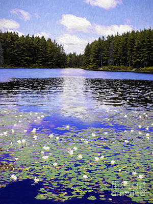 Photograph - Monet's Wilderness by Barbara McMahon