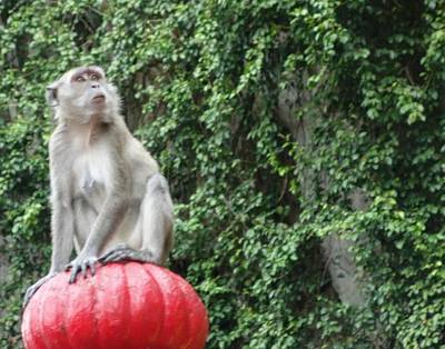 Photograph - Money Monkey by Lisa Piper