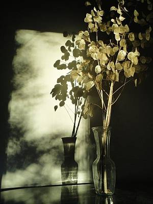 Photograph - Money Plants Really Do Cast Shadows by Guy Ricketts