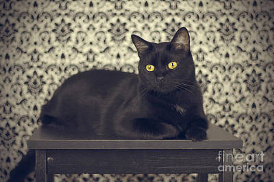 Black Cat Photograph - Mongo The Robust Cat by Jennifer Ramirez