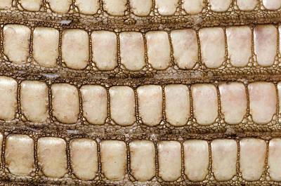 Monitor Photograph - Monitor Lizard Skin by Nigel Downer