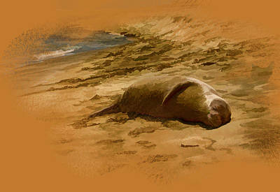 Photograph - Monk Seal On The Beach by Gordon Engebretson