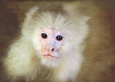 Digital Art - Monkey Portrait by Trina  Ansel