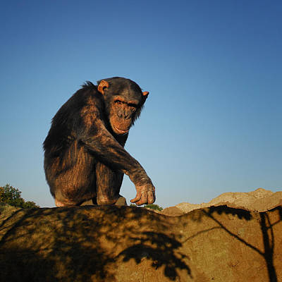 Predicament Photograph - Monkey by TouTouke A Y
