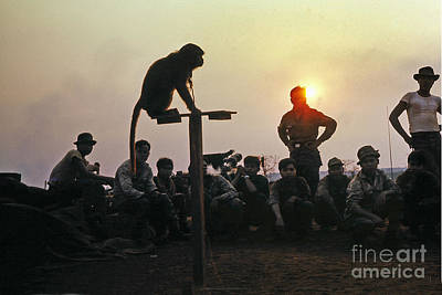 Photograph - Monkey At Artillery Firebase  Central Highlands Vietnam 1968 by California Views Archives Mr Pat Hathaway Archives