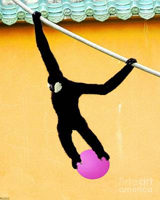 Photograph - Monkey Ball by Lizi Beard-Ward