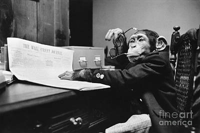 Photograph - Monkey Business by Bruce Buchenholz