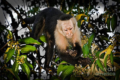 Costarica Photograph - Monkey Business  by Gary Keesler