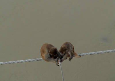 Monkey Couple On Rope Original by Bliss Of Art