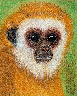 Drawing - Monkey by Jo Prevost
