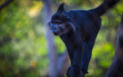 Photograph - Monkey by Matthew Onheiber