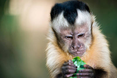 Photograph - Monkey Munchies by Ray Warren