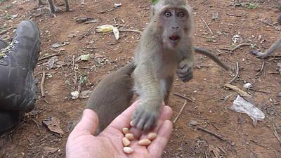 Monkey Nuts Art Print by Carol Jadzia