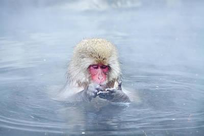 Photograph - Monkey Park II by Sergio Formoso
