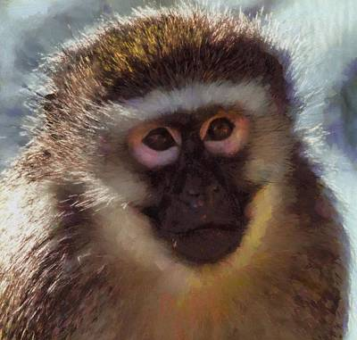 Stare Mixed Media - Monkey Portait Painting by Dan Sproul