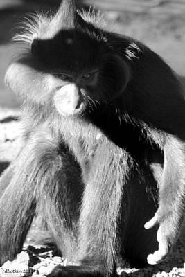 Monkey See Monkey Do Art Print by Dick Botkin