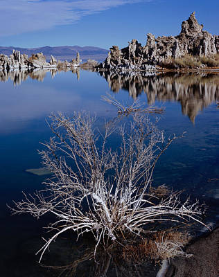Photograph - Mono Lake Salt Bush by Tom Daniel