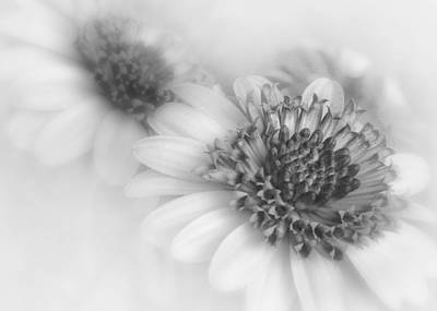 Photograph - Monochrome Blooms by David and Carol Kelly