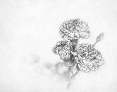 Photograph - Monochrome Carnation by David and Carol Kelly